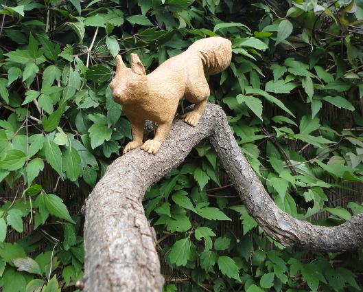 nieuw eekhoorn foto DSC01628